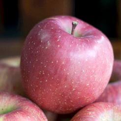 福島県のリンゴ